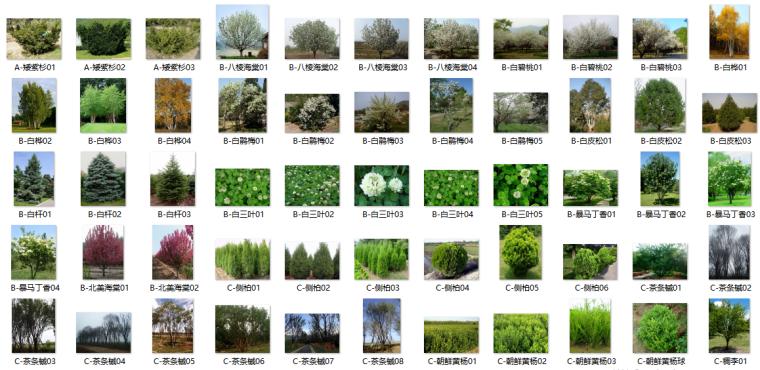 最全苗木表植物品种、苗木选型、苗木表图库